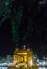 Golden Temple (Ashu Puri Photography) Tags: goldentemple golden canonphotography captured camera canon5d capture canonclick capturedmoments canonphotos landscape nightshoot nightview night lights life lighting lifepart location natulight natural indiaphotographers nature