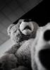 Voyeur (jasenk) Tags: dutchangle desaturation toy bw teddybear stickynote