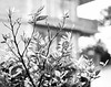 1/31 Dec17- Washing out all the bad colors (KamPhotography3) Tags: rain trees bnw black white raining morning canon canon750d nature naturelove drizzling december bw blackandwhite garden
