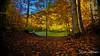 on the way to the lake / 031217391 (devadipmen) Tags: autumn bolu forest landscape landscapephotographer nationalpark naturepark naturephotographer orman sevenlakes sonbahar türkiye waterfall yedigöller şelale istanbul