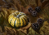 An Autumnal Collection (shawn~white) Tags: 100mm canon6d autumn cone gold harmonious leaf leaves nostalgia primelens restful squash studio vegetable warmth