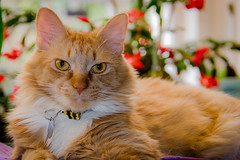Muffin at 1 Year Old (t conway) Tags:
