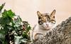 IMG_4769.JPG (esintu) Tags: cat urfa kedi