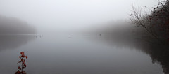 Foggy Morning (Faron Dillon) Tags: fog foggy morning lake canon 5ds 24105is 24105 bond richmond hill ontario canada low contrast red grey forest kayak boat geese ducks nature