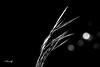 souffle ultime (FLOCVROFF) Tags: monochrome lumiere nature canon bokeh 250mm