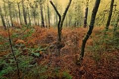 De Moeren (cees van gastel) Tags: ceesvangastel canoneos550d sigma1020mm natuur nature landschap landscape demoeren natuurgebied naturalarea trees bomen autumn herfst
