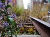 High Line, New York City (tomschroder) Tags: newyorkcity highline parks streetphotography