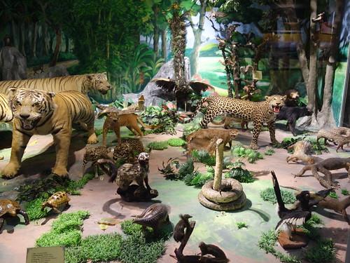 Des animaux empaillés de la faune locale.