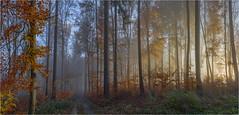 Waldimpression (Robbi Metz) Tags: deutschland germany landscape forest trees autumn fog sunrise colors canoneos