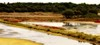 France - marais de l'île de Ré - enlarge please to appreciate more (olivierurban) Tags: ile ré marais canoneos60d efs18135mmf3556is france atlantique