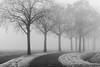 Cold misty morning (Mariannevanderwesten) Tags: misty roosendaal nature natuur nikon