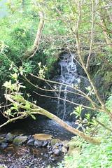 IMG_3122 (avsfan1321) Tags: connemaranationalpark connemara nationalpark ireland countygalway green lush landscape plants water