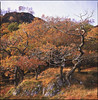 autumn (steve-jack) Tags: hasselblad 501cm velvia expired 80mm cb lake district autumn fall fuji oak
