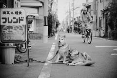 From Tengachaya to Hanazono-Minami_01 (Takashi.Tachi) Tags: