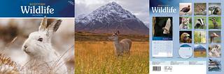 Scottish Wildlife