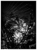 Finale (S|SCH) Tags: s|sch siegfried schmid schwarzundweis shadow schweinfurt nacht bw bnw blackandwhite blackanwhite night monochrome monochrom