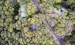 Forest enclaves (OzzRod) Tags: dji fc300s36mmf28 phantom3advanced quadcopter drone vertical aerial forest canopy road houses barraggabay dailyindecember2017