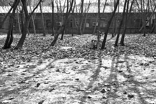 I can't see the bike for the trees.  Shandong University Hongjialou Campus, Jinan, China