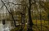 14-03-13 sonauf  fisch baumkr 3 dsc00158-1 - Kopie (u ki11 ulrich kracke) Tags: bw baumkrone fisch nah panorama promenade schaalsee schatten sonnenaufgang steg trauerweide ufer vorhang zarrentin