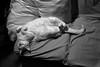 Sonos/Dreamin' (carlosdeteis.foto) Tags: carlosdeteis galiza galicia cats gatos jatos