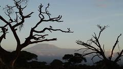 Kilimandscharo (tor-falke) Tags: africa afrika africalandscape afrique african afrikanwildlife tree baum bäume arbre sky himmel outdoor kenia kilimandscharo berge berg mountain montagnes nice niceview landscape wald landschaft ngc