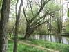 Along the River Burgos (d.kevan) Tags: spain burgos rivers grass paths reflections trees riverbanks