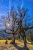 Dancing Trees (*Capture the Moment*) Tags: 2017 ahorn backlight backlit berge bäume farbdominanz gegenlicht kleinerahornboden landschaften maple mountains sky sonne sonye1018mmf4oss sonynex7 sun trees wetter blau
