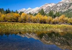 IMG_8188 (Will Elder) Tags: reflection sierra twinlakes