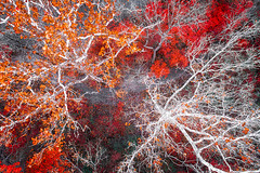 PSYCHEDELIC (Nenad Spasojevic) Tags: woods landscape psychedelic orange abstract closeup fromabove trees hiking trails woodland ricketglen red illinois nenadspasojevic landscapes aerial fallcolors above midwest creative dji exploration fall perspective creativity droning drone chicago il usa