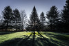 Chilly Morning (Nicholas Erwin) Tags: landscape morning shadow frosty cold grass contrast nature naturephotography trees chilly nikon d610 nikkor 2018g waterbury vermont vt unitedstatesofamerica usa america sunrise silhouette fav10 fav25 fav50