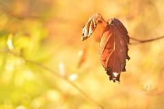 troll (Chocolatine photos) Tags: troll automne feuille photo photographesamateursdumonde pastel makemesmile minimaliste flickr flickrelite flickrelitegroup nikon nikonpassion nikoneurope nature naturebynikon jaune pdc