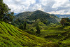 Maleisië-746 (AKiewiet) Tags: tanahrata pahang maleisië my