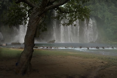 Haven (misunderstories) Tags: bangiocwaterfall caobang vietnam asian asia nature tree waterfall monsoon haven thediary