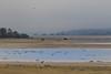 Lac du Der (ericdu29) Tags: grues montier