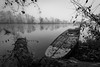 Novemberblues 02 (Wilflingseder) Tags: austria morning lake pond woods misty zen tranquility calm waterscape wesenufersw novemberblues sw wesenuferswherbst autumn contrast trees bw blackandwhit nature sunset water sky landscape blue red beach portrait night rock blackandwhite cats newyorkcity san rome roadtrip urban honeymoon