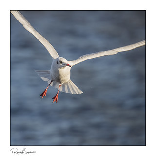Gull in time