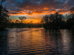 November Sunset (Ian M Bentley) Tags: castleashby castleashbyfisheries scotlandpond lake pond northampton wellingborough england uk lateafternoon eveningsun olympus omd em5ii zuikopro1240mm prolens reflection water orange pink red sunset stillwaters simmer outdoor sky serene solice november winter dusk landscape 2017 light colours colors clouds tree trees wonderful