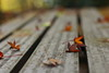 bench (mizuk@) Tags: japan gifu autumn maple leaves colorful canon 岐阜 美濃 もみじ谷 紅葉