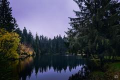 (lotl.axo) Tags: xf18135mm deutschland landschaft teich ochsenbacherteich spiegelungen thüringerwald herbst thüringen xt1 germany wasser autumn lake landscape paysage reflections water