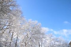 winter sky in Georgia