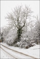 Winter arrives... (Craig 2112) Tags: snow tree hargrave northamptonshire