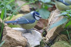 IMG_6985 (Mo-nett) Tags: nature oiseaux