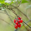 Berries (Alex . Wendes) Tags: d7000 nikond7000 nikon18105 berries macro closeup red