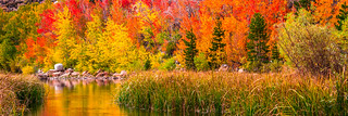 The High Sierras Fall Colors! Bishop Creek Fine Art Fall Foliage North Lake!  Epic Landscape Photography: Elliot McGucken Fine Art Nature Photography!