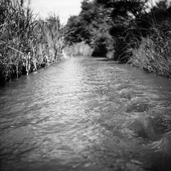 Feel it in my feet (spannerino) Tags: yashicad yashica shanghaigp3 analogue analog analoguephotography black blackandwhite canon9000f film filmlives grain handprocessed ilfordlc29 landscape mediumformat monochrome newzealand outdoor scanned square tlr vintage vintagecamera waistlevelviewfinder 6x6 water blur stream river creek