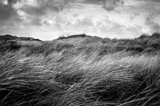 Shelter in the Dunes