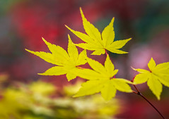 Gibbs Fall Colors (C.Fredrickson Photography) Tags: carlfredrickson november 2017 color autumn ©carlfredrickson2017 georgia ballground fall ga gibbsgardens unitedstates us
