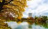 Late Autumn (1seeu) Tags: picoftheday reflections colors asia hokkaido fallfoliage