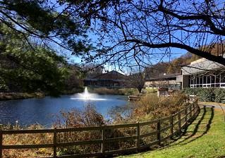 Park School pond