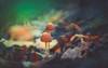 Mushrooms (Dhina A) Tags: sony a7rii ilce7rm2 a7r2 mushroom minolta rf rokkorx 250mm f56 mirror reflex minolta250mmf56 md prime rokkor bokeh